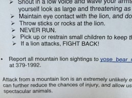 If a lion attacks : FIGHT BACK !!