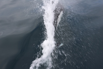 Jet de baleine