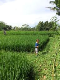 Max dans les rizières