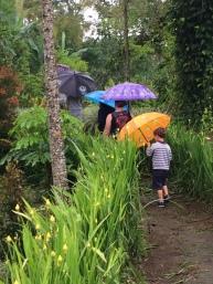 La visite du potager sous le pluie