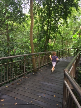 Sgp Canopy Walk